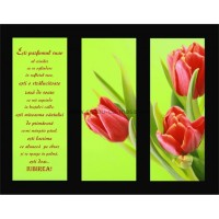 Placheta catifea - Ești parfumul suav al crinilor