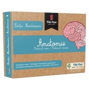 Anatomie: Sistemul osos si Sistemul nervos - Lectii Montessori pentru copii (3+ ani)