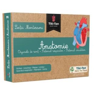 Anatomie: Organe de simt, Sistemul respirator si Sistemul circulator - Lectii Montessori pentru copii (3+ ani)